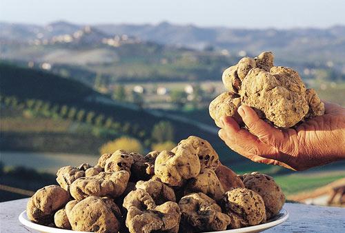 truffles in Italy