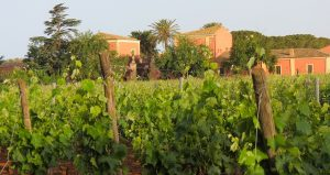 Sicilian Vineyards Wine and Food small group tour Oct